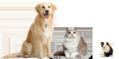 Hunde Katzen Kleintiere Vögel Tierferienheim Preise Kosten