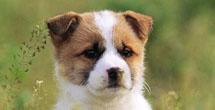 Das ideale Ferienheim <br>für Ihren Hund