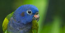 Sogar Vögel fühlen<br> sich bei uns wohl